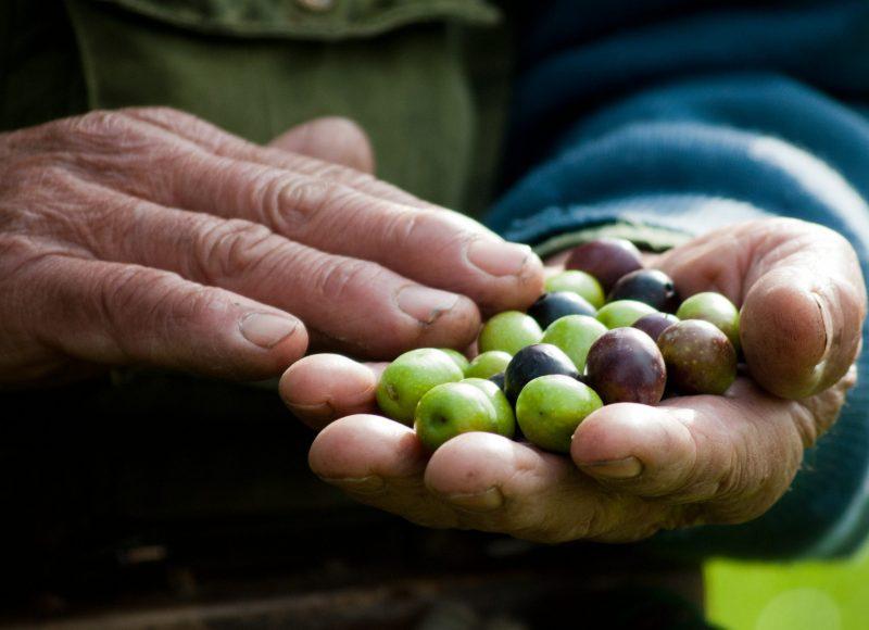 Deux mains qui tiennent des olives